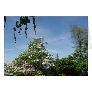 O primavera floresce Vancôver, BC cartão