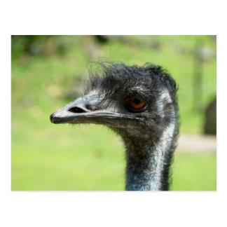 O ` principal disparou do em Emus no jardim Cartão Postal