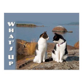 O que é acima do cartão da conversação do gato