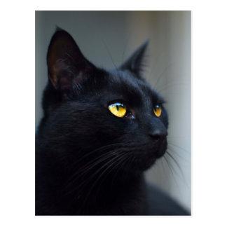 o que era seu cartão de pensamento do gato
