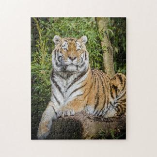 O quebra-cabeça régio da foto do tigre com caixa