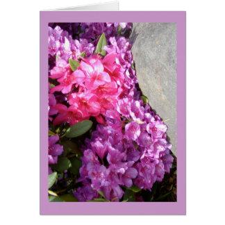 O rododendro floresce o cartão