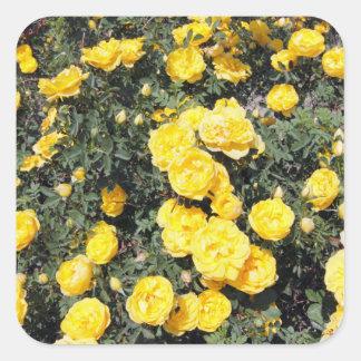 O rosa amarelo ensolarado floresce o ônibus adesivo quadrado