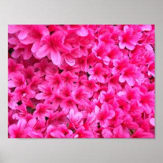 O rosa bonito floresce o poster