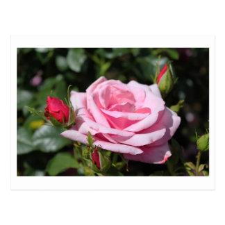 o rosa do rosa floresce o feliz aniversario. amor, cartão postal