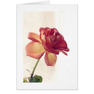 o rosa do solteiro editou 2, dia dos namorados fel cartoes