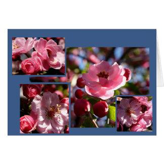 O rosa floresce todo o cartão da ocasião