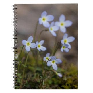 O roxo pequeno de Bluets floresce o caderno do