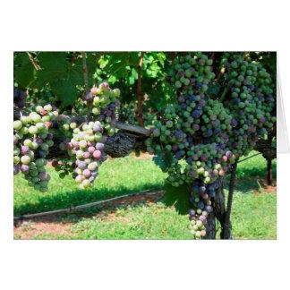 O sol de agosto amadurece o cartão vazio de uvas