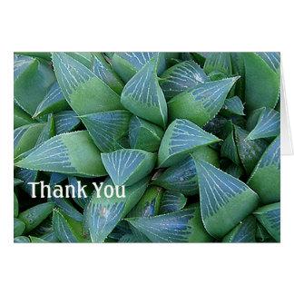 O Succulent de Haworthia planta cartões de