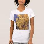 O t-shirt das mulheres da árvore do álamo tremedor