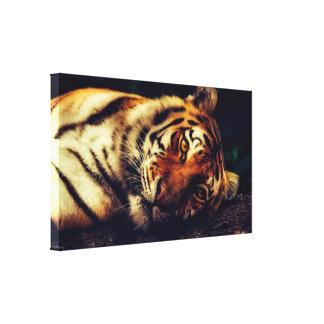 """O tigre de descanso 15,47"""" x 9,00"""" canvas imprime"""