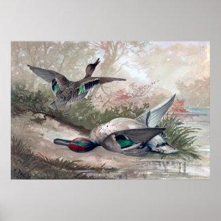 O verde voado Ducks o poster da pintura do vintage