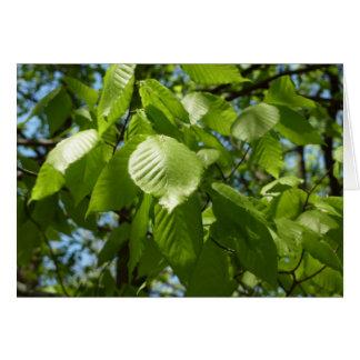 O vidoeiro do primavera sae do vazio verde da cena cartão comemorativo