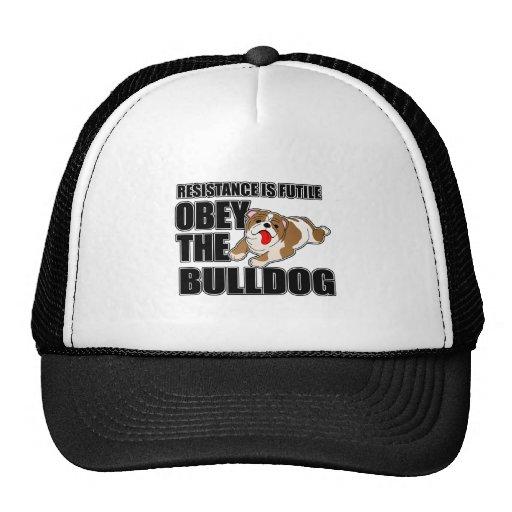 Obedeça o buldogue bone