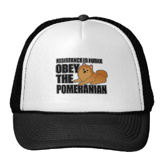 Obedeça o Pomeranian Bone
