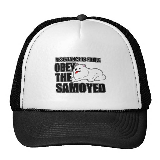 Obedeça o Samoyed Bone