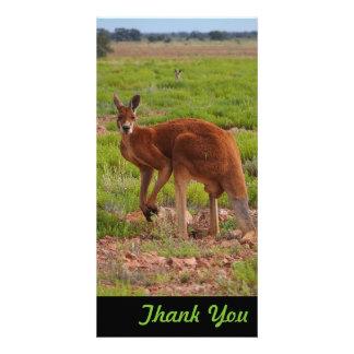 Obrigado cartão com fotos - canguru vermelho