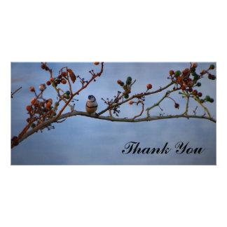 Obrigado cartão com fotos com o passarinho barrado