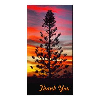 Obrigado cartão com fotos - por do sol do parque