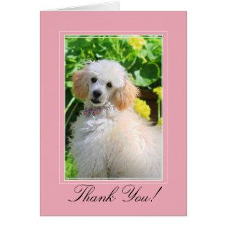 Obrigado cartão da caniche de brinquedo