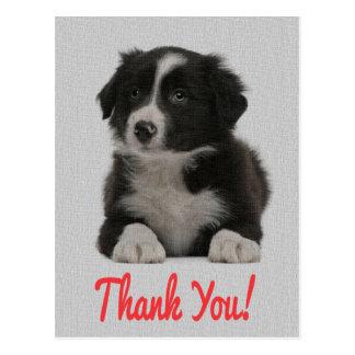 Obrigado cartão do cão de filhote de cachorro de