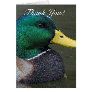 Obrigado cartão do pato do pato selvagem