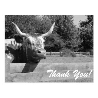 Obrigado céptico da vaca você cartão