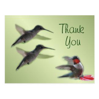 Obrigado do cartão do colibri você ou alguma