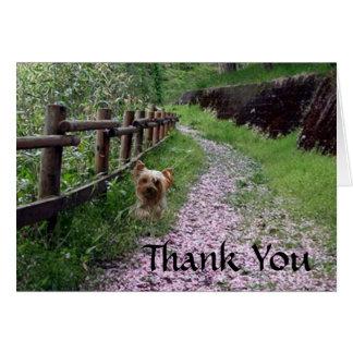 Obrigado do cartão do yorkshire terrier você