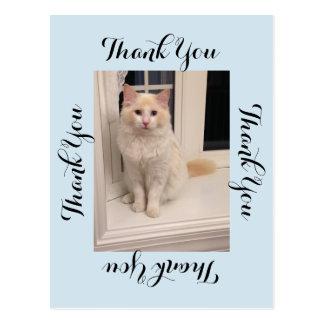 Obrigado do gato você cartão - azul cartão postal