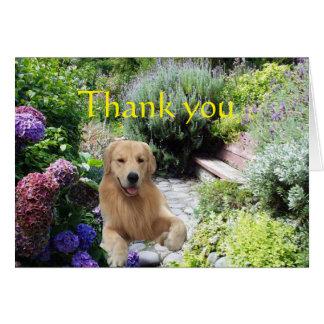 Obrigado do golden retriever você no cartão do