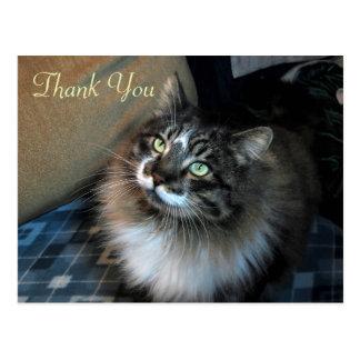 Obrigado irresistível de Zorro do gato você cartão