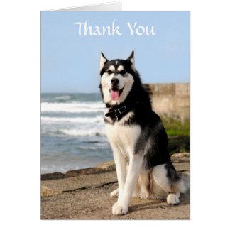 Obrigado o rouco Siberian no cartão da praia