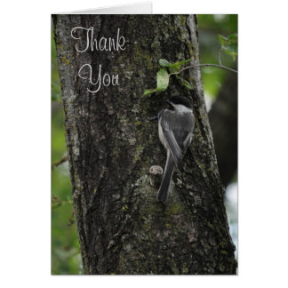 Obrigado poucos cartões do passarinho por Janz