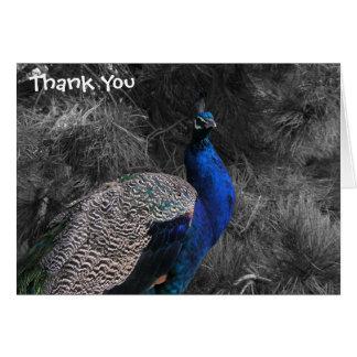 Obrigado vibrante do casamento do pavão você cartõ cartão de nota