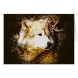 Observação do lobo cinzento cartoes