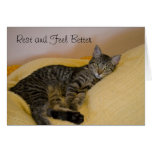 Obtenha o cartão bom do gato