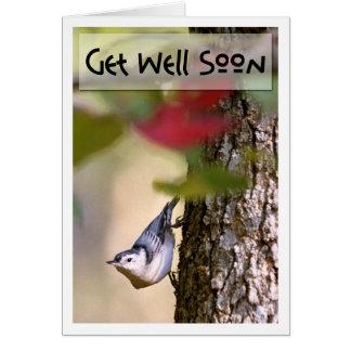 Obtenha o poço - cartão do pica-pau-cinzento