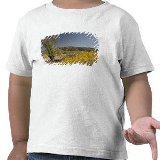 Ocotillo e senna do deserto tshirts