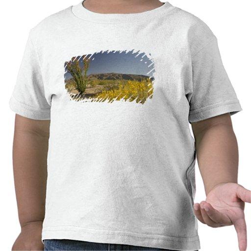 Ocotillo e senna do deserto tshirt