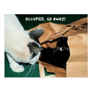 Ocupado, parta! Gatos engraçados Cartão Postal