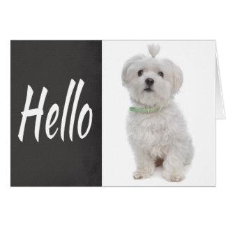 Olá! cartão de nota maltês branco do quadro do cão