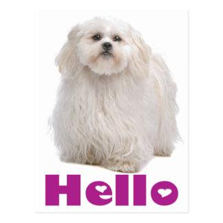 Olá! cartão do cão de filhote de cachorro de Shih