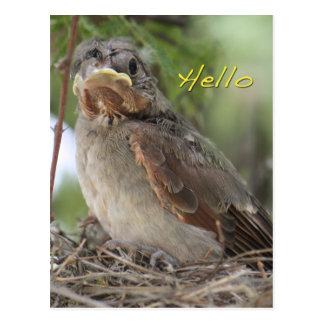 Olá! cartão do mundo