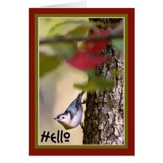 Olá! - cartão do pica-pau-cinzento