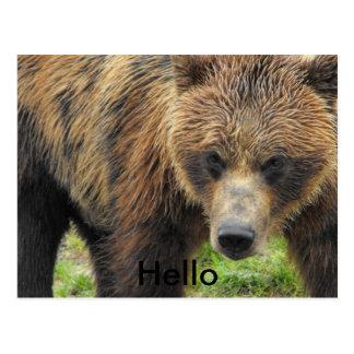 Olá! cartão do urso