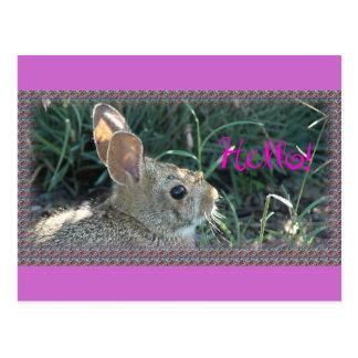 Olá! coelho cartoes postais