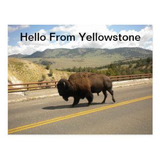 Olá! do cartão de Yellowstone