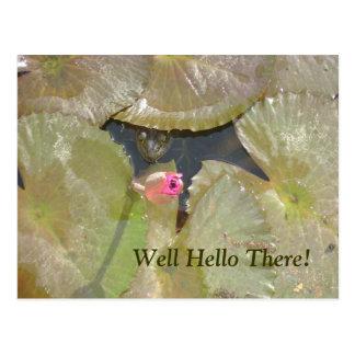 Olá Froggie Cartão Postal